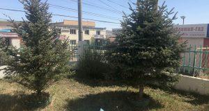 Монгол Улсын Ерөнхийлөгчийн зарлигийн дагуу маргааш бүх нийтээрээ мод тарина